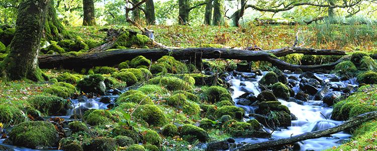 ISO 14001 Environmental management